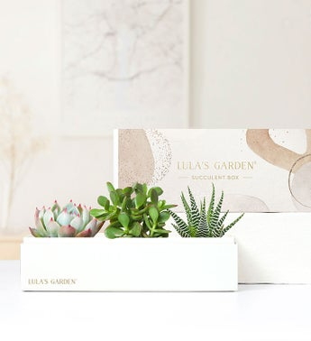 Succulents by Lulas Garden