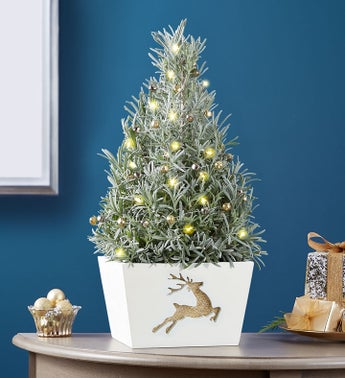 Fragrant Holiday Lavender Tree
