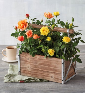 Peach and Yellow Mini Rose Crate