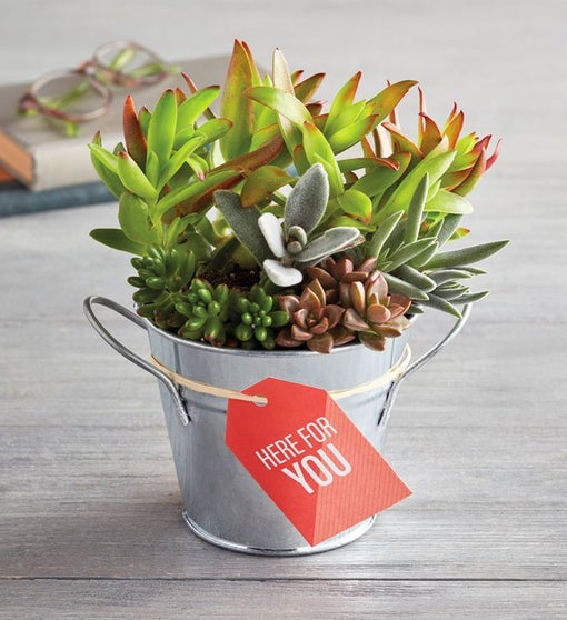 """""""Here for You"""" Succulents"""