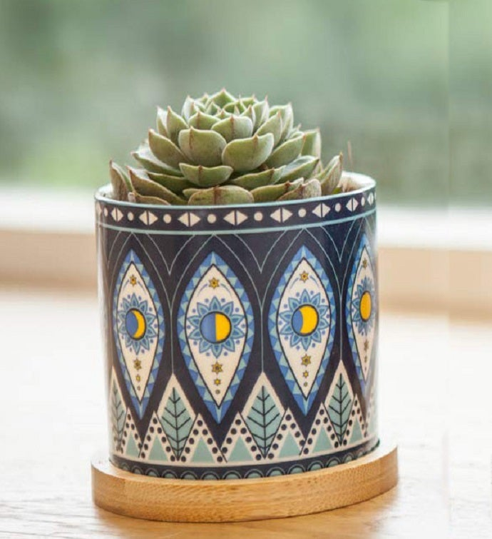 Succulent Plant In Colorful Ceramic Planter